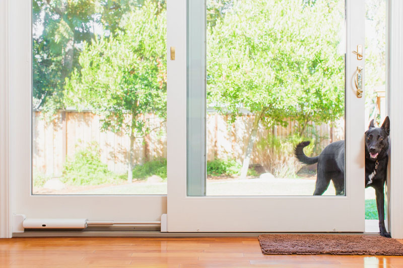 The Gadgeteer: Make outdoor access easier for your puppers with Wayzn